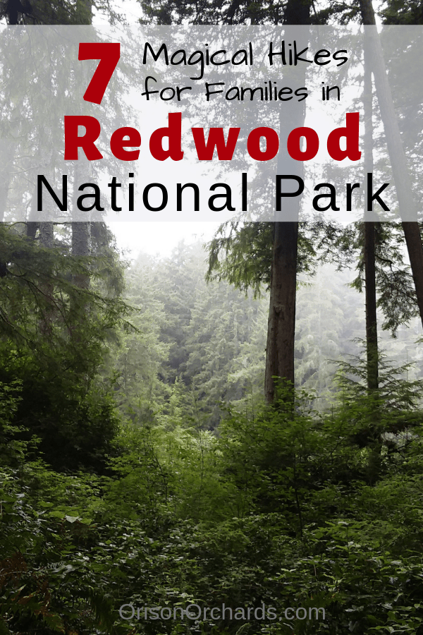 7  Magical Hikes for Families in Redwood National Park