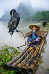 Cormorant fisherman in Yangshuo, China