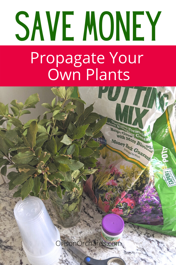 Save Money by Propagating Your Own Plants